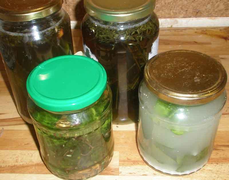Biologisches Flüssig-Waschmittel aus Efeublättern