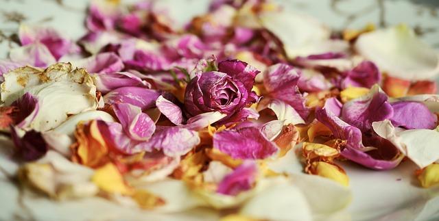 Rosenblüten für die Lotus-Geburt